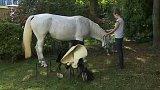 Bílý kůň ustájený v centru Ostravy