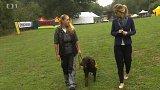 Cvičení psi pro hendikepované