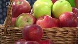 Jablka, druhy a jak poznat české jablko - Ing.Lubor Zelený + anketa