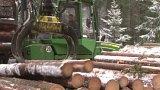 Nejlepší doba na kácení stromů