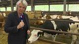Nízké ceny mléka a masa