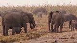 Rapidní pokles počtů slonů