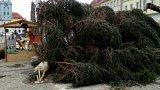 Zlomený vánoční strom v Žatci