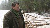 Šumava nemá dost peněz z těžby dřeva