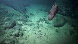 Podmořské vulkány