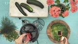 Ovocná šťáva z melounu a okurky