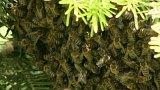 Včelstvo na klášterní zahradě