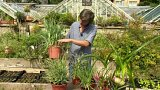 První pomoc na okně, pěstujeme bylinky