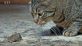 Výživa koček