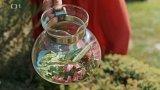 Čaj z čerstvých šípků na podporu imunity
