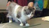 Star Show – tak trochu jiná výstava koček