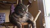 Kočky Jůlinka a Dejvík: v čem je problém?