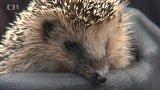 Útulek pro ježky