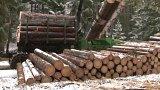 100 tisíc kubíků poničeného dřeva