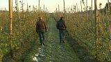 Mrazivé počasí a ochrana úrody v Evropě