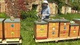 Umělá inteligence na pomoc včelám