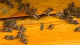 Spor včelařů s lihovarem