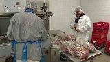 Cena masa divokých prasat