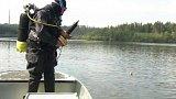 Sledování ryb díky implantované vysílačce