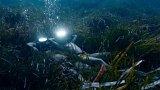 Život přírodovědce a filmaře Jacquese Cousteaua