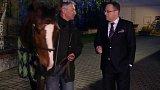 Koňská síla: rozhovor s hipologem Cyrilem Neumannem