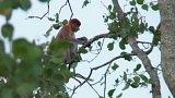 Češi bojují za záchranu kahaua nosatého + rozhovor se S. Lhotou