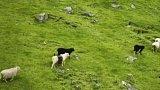 Faerské ostrovy na mapě díky ovcím