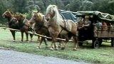 Tábor pro děti z jezdeckého oddílu Lesního závodu Broumov (1989)