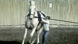 Gymnastika na koni (1989)