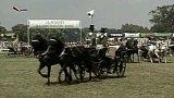 Slavnosti kladrubského koně (1991)