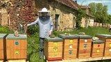 Projekt BeeTech