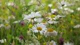 Květná louka