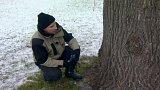Defekty stromů