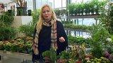 Rostliny do sucha