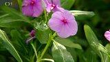 Síla léčivých rostlin