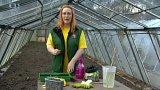 Výsev brukvovité zeleniny