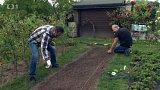 Zářijové výsevy ozimých zelenin