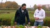 Přezimující orgány plevelů a jejich redukce