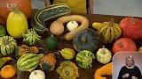 Pozvánka na dýňový podzim v botanické zahradě a víkendové akce