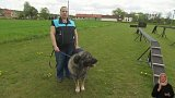 Šarplaninský pes - hlídač stád