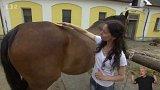 I koně bolí tělo - jak to poznáme