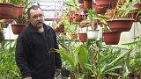Rozkvetlé tropické rostliny