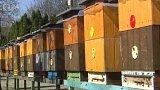 Včelaři podepisují petici