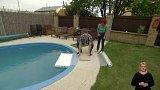 Bazény mohou být pastí pro zvířata