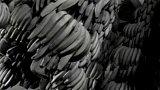 Dozrávání banánů