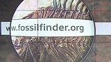 FossilFinder.org