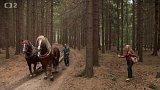Koně při práci v lese