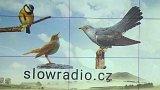 Grafika: Ptačí rádio