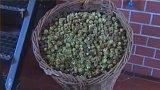 Pivovar Zvíkov