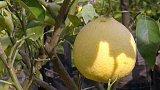 Klub citrusářů